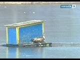 Королёвцы готовят спецоперацию по спасению необычной утки