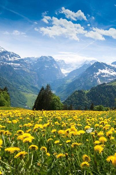 Доброта, как одуванчик. Яркое желтое солнышко. Зацвел в душе, а потом полетели частицы твоей души рассеивать доброту… Преумножая. И получая взамен много-много золотого тепла доброты.
