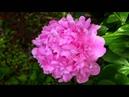 FLOWERS FOR THE BEAUTIFUL PERSON YOU ARE - ERNESTO CORTAZAR - Y VOLVERE-EL-TRISTE...
