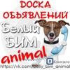 """Доска объявлений """"Белый БИМ""""-Animal"""