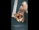 › Публикация из «Instagram» сериала «Американская домохозяйка» 26.09.18.