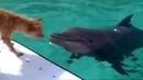 Дельфин спасает собаку Зевс и Роксана