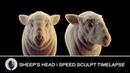 Eyes of Lamia Sheep's Head Speed Sculpt Zbrush