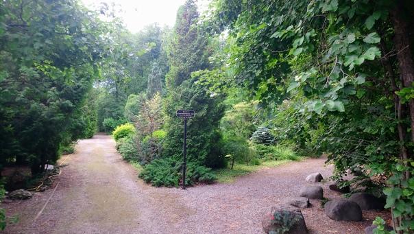 Дендрологический сад обалденный. Очень хочется туда попасть.  7 июля 2018