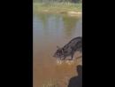 Первый раз купается Лаки