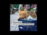 Японские коты-путешественники