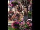 spring in Alsace-France