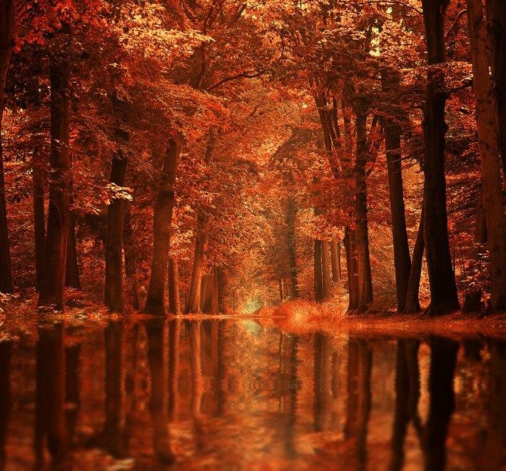 Фото осінь
