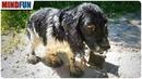 Trauriger Hund steht am Straßenrand - was um seinen Hals hängt ist unglaublich grausam!
