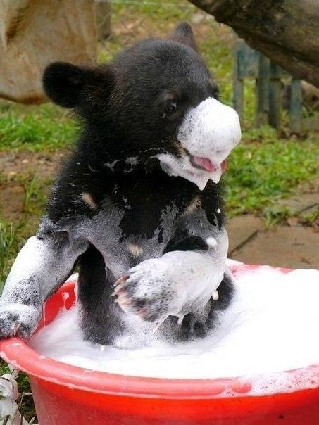 Медвежонок принимает ванну
