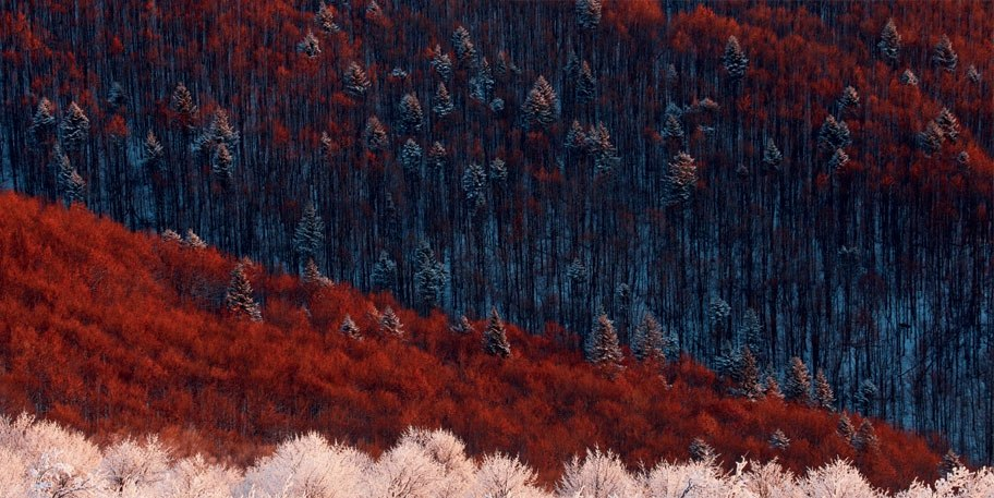 (Красно-снежный лес) Фото: Гжегож Лесниевски