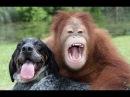 Странная дружба животных (Документальный фильм, 2012)