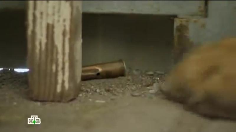 Возвращение Мухтара - 10_47 - Приз за стрельбу