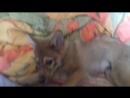 Кегля и Вольта. 15.04.18г