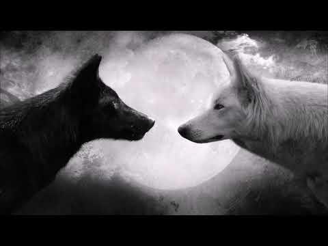 Черный волк и белая волчица