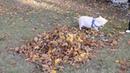 Осень тоже хорошо · coub коуб