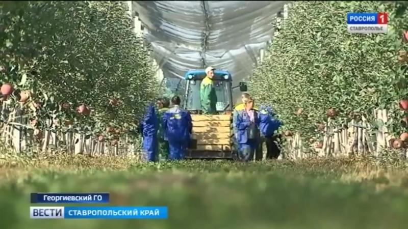 Владимир Путин и Дмитрий Медведев познакомились с суперинтенсивными садами на Ставрополье. Автор Шамиль Байтоков