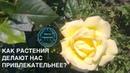 Выпуск 1. Барнаулов О.Д. о научной фитотерапии