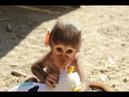 Cute Monkeys Part 52 - Baby Baboon Monkey Eating Banana Cake...Really Delicious or Unappetizing?