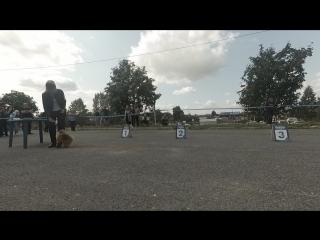 Юлия и Оскар - выставка собак, Березники - 19.08.18