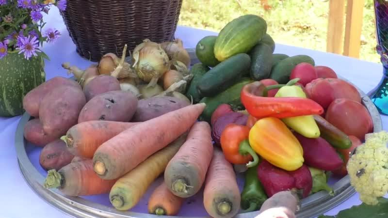 В Уразово состоялась аграрная выставка