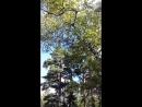 Лес , птицы