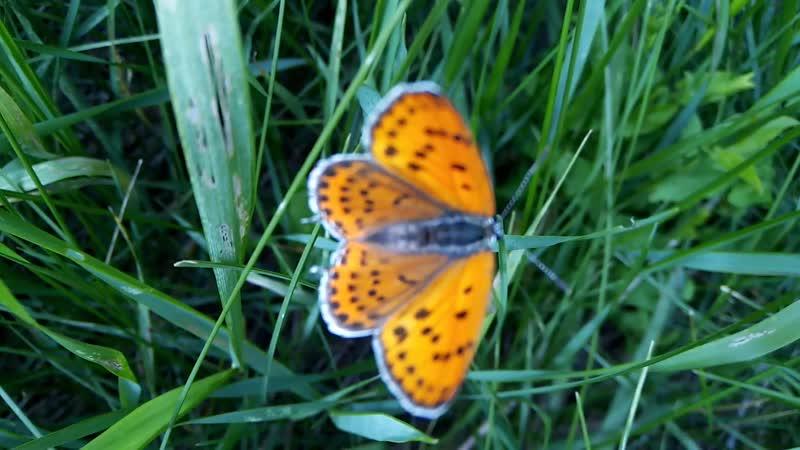 Бабочка красавица в ярком цветном платьице