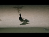 Bingo Players ft. Far East Movement - Get Up (Rattle) (Official Video)
