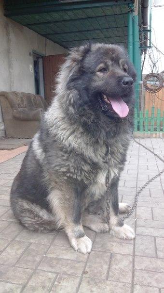 Пропала собака, по кличке Амур.