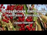Егорьевский Питомник Никитенко Александра Весенняя Обрезка Сада