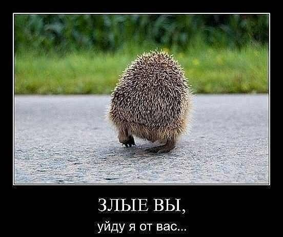Фото №314054081 со страницы Андрея Маркина