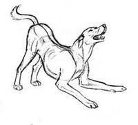 Как нарисовать собаку карандашом поэтапно - ДейФан