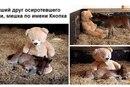 В смысле, пони с планеты Земля :D Наткнулся тут на фотку в ВКонтакте. .  Решил, что это достаточно мило...