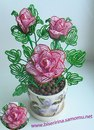 Почему так сладко пахнут розы, Принося сумятицу в сердца.  Аромат цветов рождает грезы, Душу будоражит без конца.