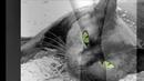 Ник Ким и группа Арамис Кот кошку любил