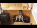 Коты самые прикольные звери планеты