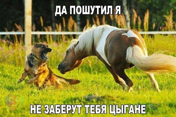 https://pp.vk.me/c543105/v543105788/100c4/0tekc3codWY.jpg