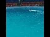 Плавание с дельфинами ❤️