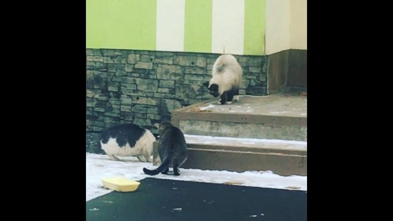 Кормление котиков)