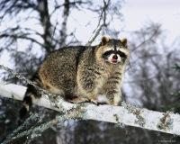 Александра Максименко, 22 апреля , Черкассы, id181490718