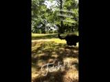Kat's video