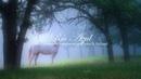 Música Celta de Flauta Arpa y Piano Música Relajante Música para Meditar y Relajarse ☼7