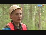 Лесная мафия безжалостно уничтожает даже реликты - Россия 24