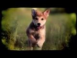 Очень красивый ролик про щенка! Он слишком быстрый для обычной камеры :) Пришлось купить высокоскоростную :)