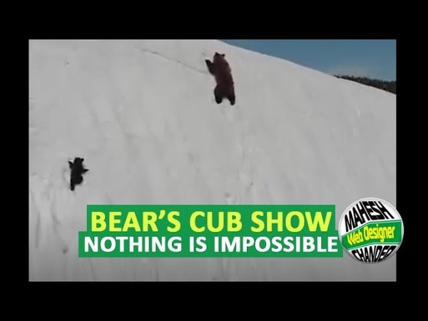 Bear cub's perseverance proves that you only fail when you stop trying