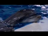 «Взвешенные и счастливые люди»: плавание с дельфинами