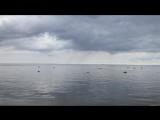 Лебяжье ( 20.08.2018) Финский залив. 60 км к Западу.