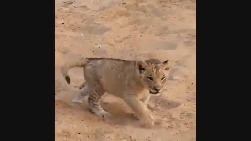 Slash Protect Animals - Starting a new day with mom 💛 Protect WildLife 🌍 SlashProtectAnimals