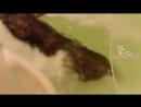 Видео Приколы с котами