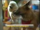 Смотрите, кто заговорил (СТС, 24.08.2007) Анонс